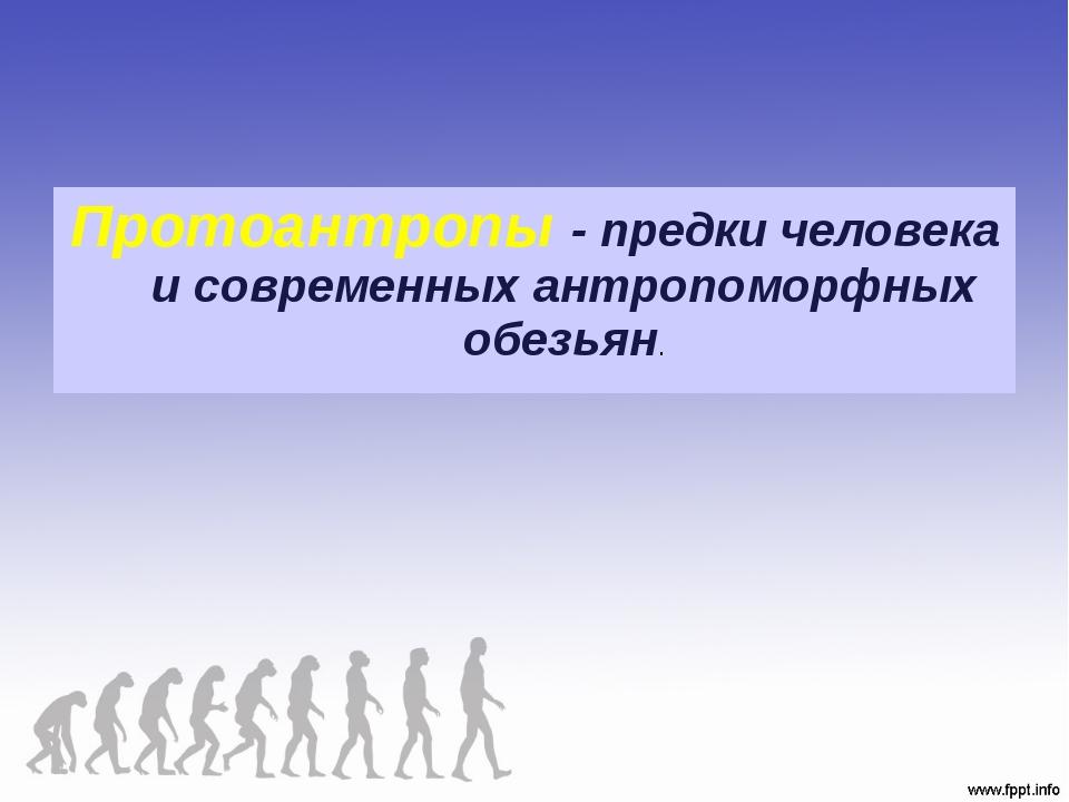 Протоантропы - предки человека и современных антропоморфных обезьян.