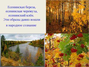 Есенинская береза, есенинская черемуха, есенинский клён. Эти образы давно вош