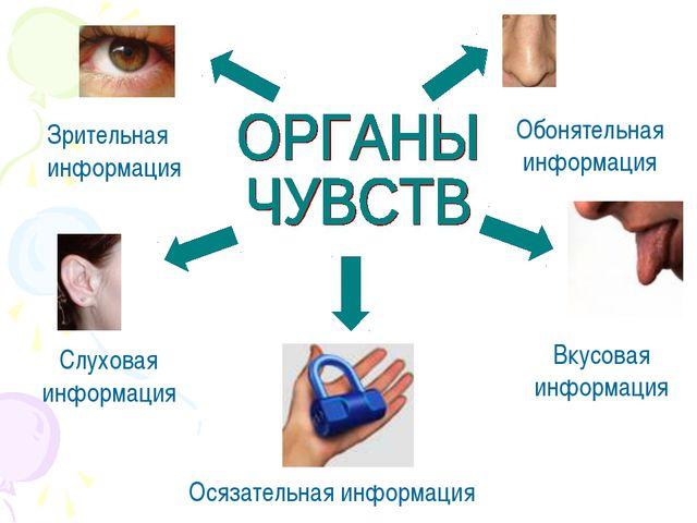 Зрительная информация Обонятельная информация Вкусовая информация Слуховая ин...