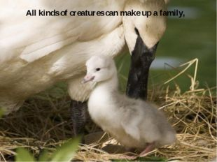 All kinds of creatures can make up a family,