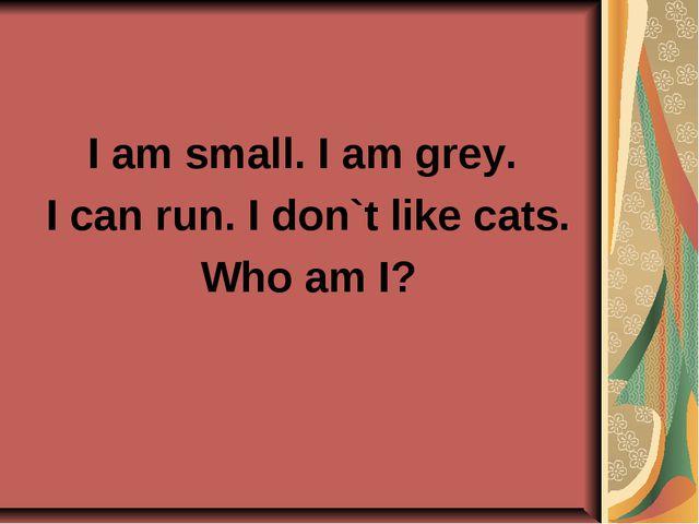 I am small. I am grey. I can run. I don`t like cats. Who am I?