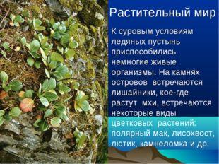Растительный мир К суровым условиям ледяных пустынь приспособились немногие ж