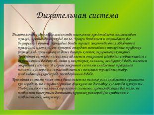 Дыхательная система большинства насекомых представлена множеством трахей, про