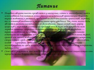 Питание Пищевая избирательность проявляется у насекомых сложно и многообразно