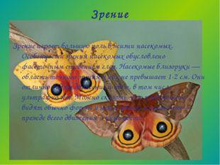 Зрение Зрение играет большую роль в жизни насекомых. Особенности зрения насек