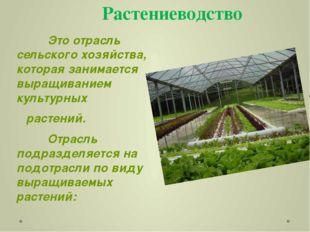 Растениеводство Это отрасль сельского хозяйства, которая занимается выращив