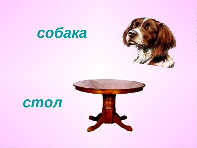 собака стол