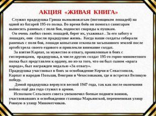 АКЦИЯ «ЖИВАЯ КНИГА» Служил прадедушка Гриша вьюковожатым (погонщиком лошадей