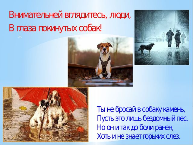 Внимательней вглядитесь, люди, В глаза покинутых собак! ». Ты не бросай в соб...