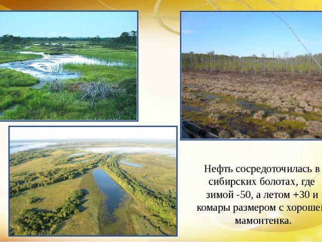 Нефть сосредоточилась в сибирских болотах, где зимой -50, а летом +30 и комар...