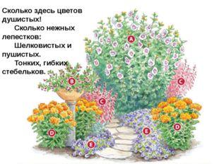 Сколько здесь цветов душистых!   Сколько нежных лепестков:   Шелкови