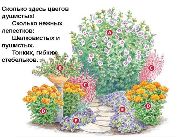 Сколько здесь цветов душистых!   Сколько нежных лепестков:   Шелкови...