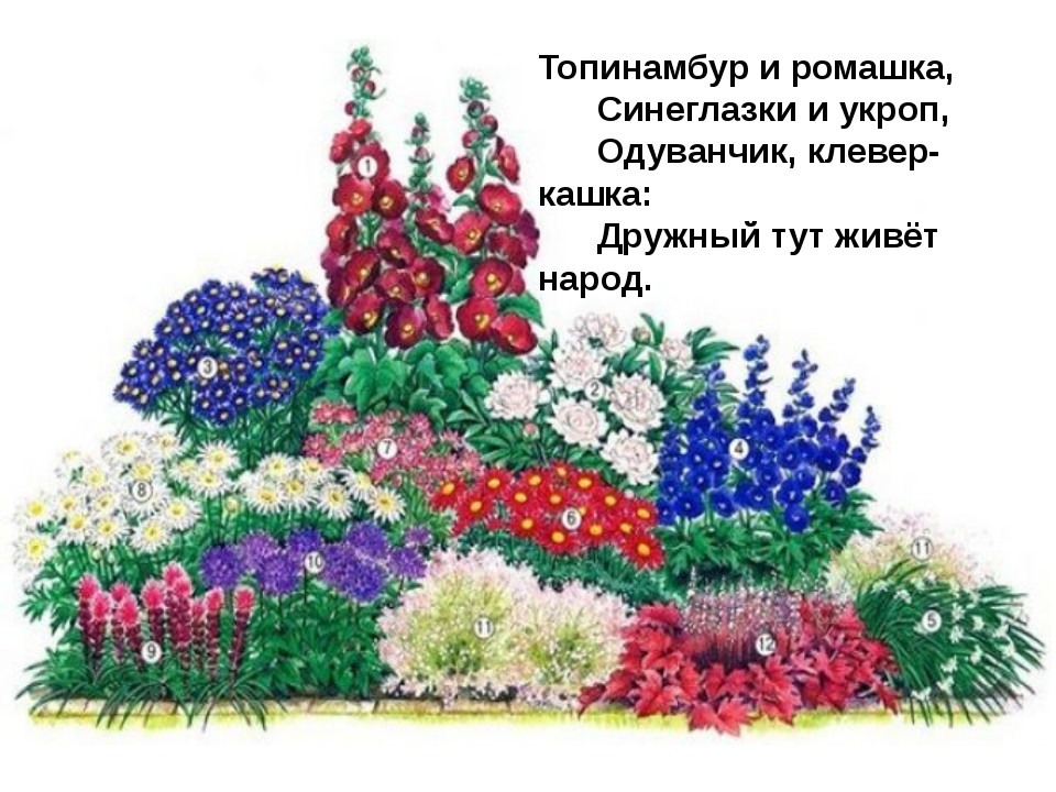 Топинамбур и ромашка,   Синеглазки и укроп,   Одуванчик, клевер-кашк...