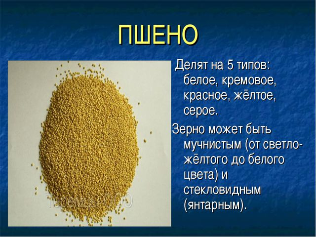 ПШЕНО Делят на 5 типов: белое, кремовое, красное, жёлтое, серое. Зерно может...