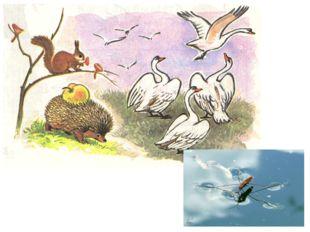 Птицы, насекомые, животные