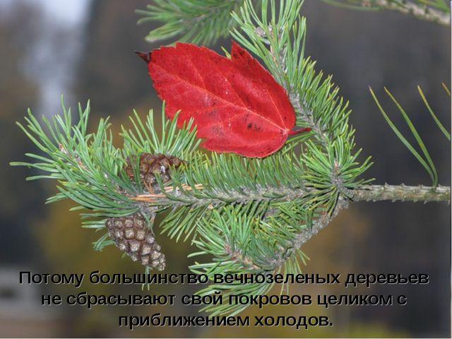 Потому большинство вечнозеленых деревьев не сбрасывают свой покровов целиком...