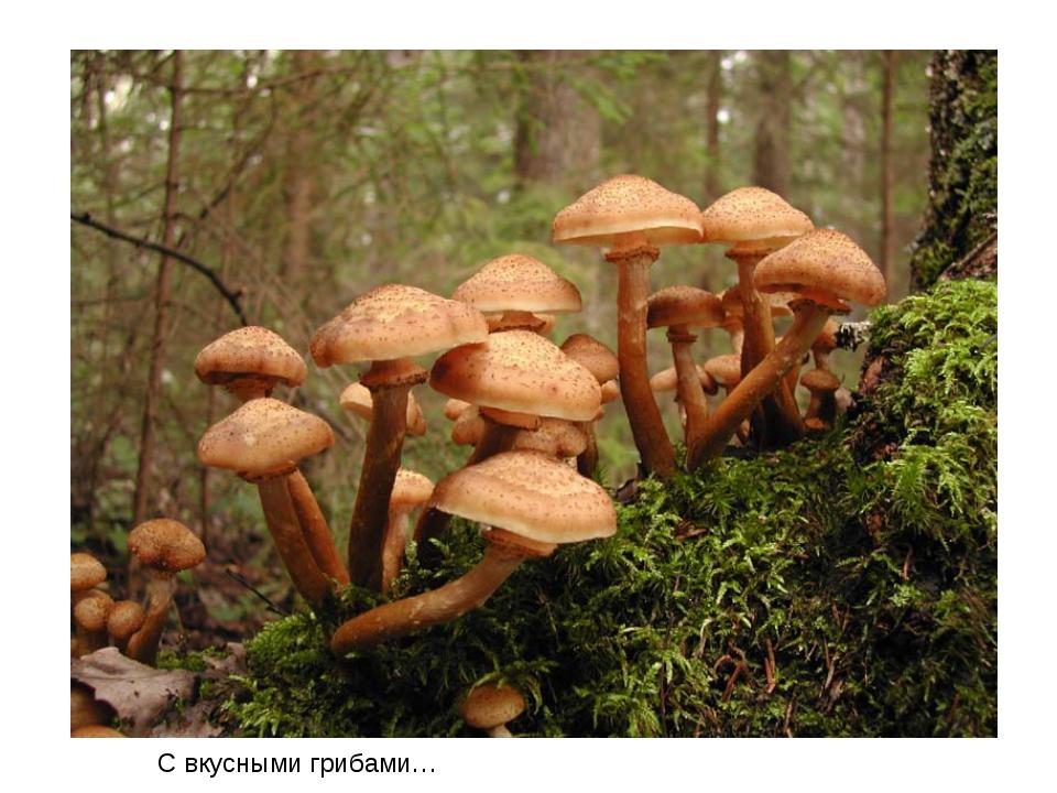 С вкусными грибами…