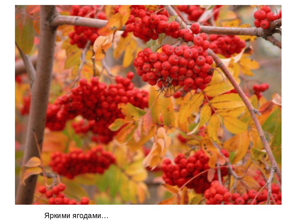 Яркими ягодами…