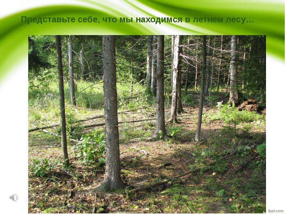 Представьте себе, что мы находимся в летнем лесу…