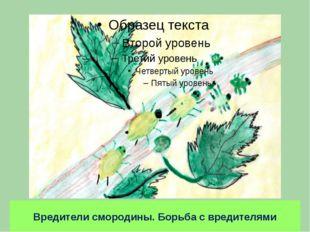 Вредители смородины. Борьба с вредителями тля