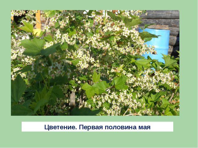 Цветение. Первая половина мая
