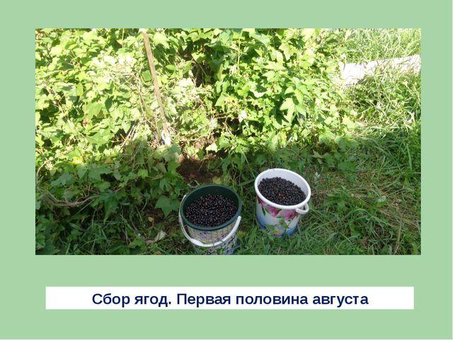 Сбор ягод. Первая половина августа