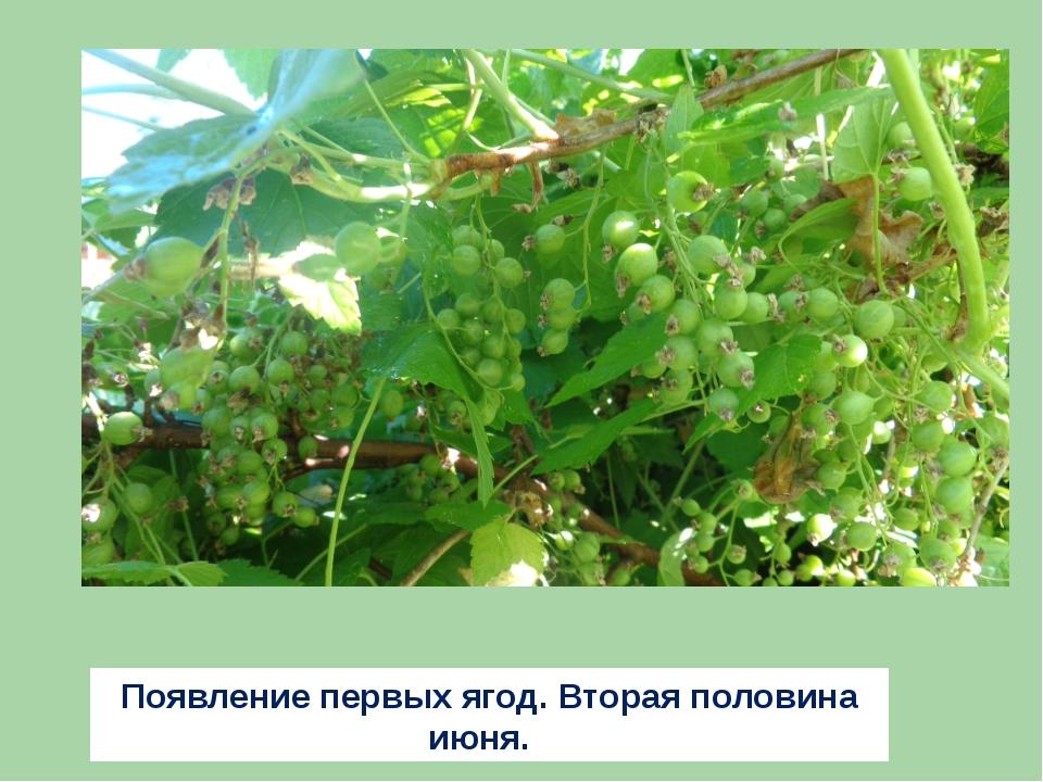 Появление первых ягод. Вторая половина июня.