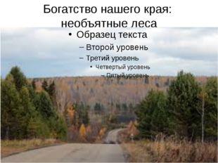 Богатство нашего края: необъятные леса