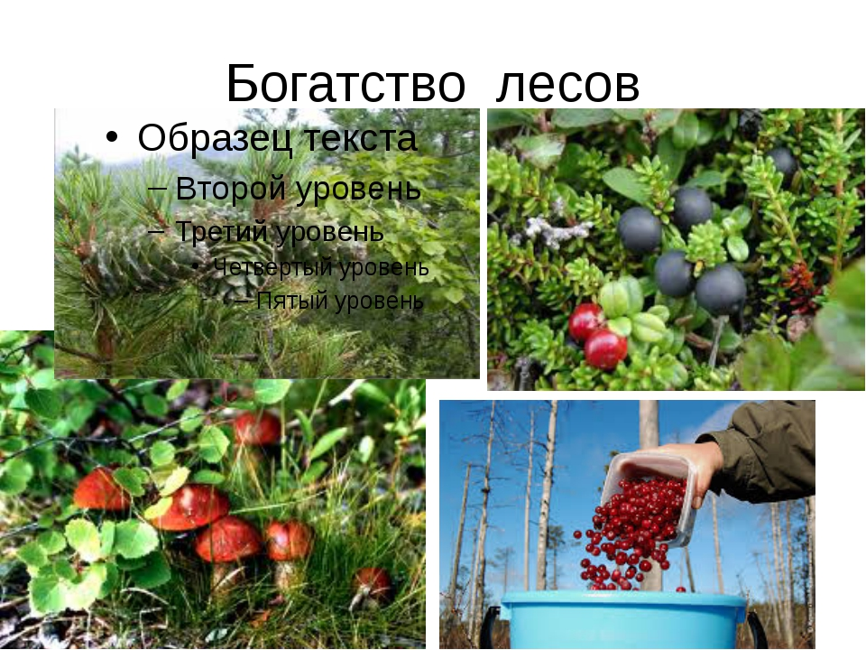 Богатство лесов