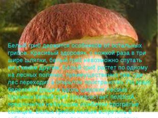 Белый гриб держится особняком от остальных грибов. Красивый здоровяк, с ножко