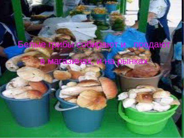 Белые грибы собирают и продают в магазинах, и на рынках