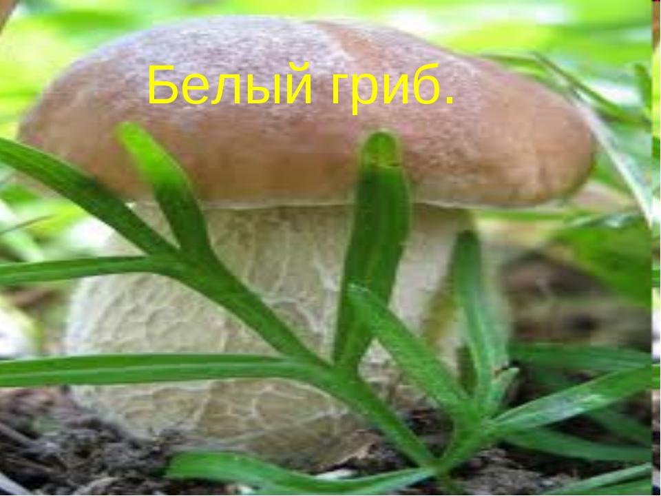 Белый гриб. Зоя Ивановна - null