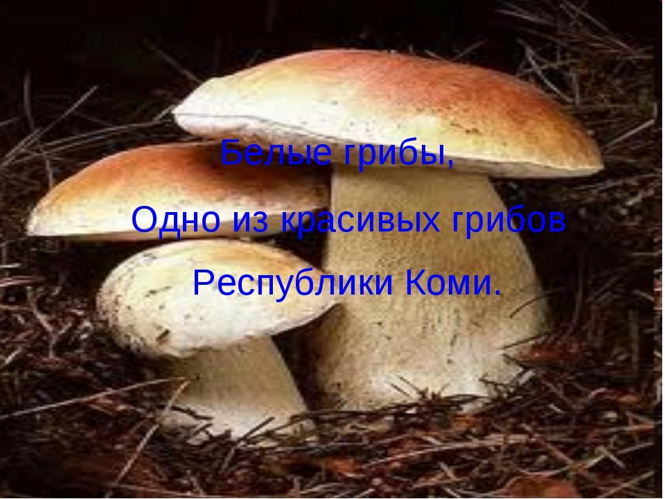 Белые грибы, Одно из красивых грибов Республики Коми.