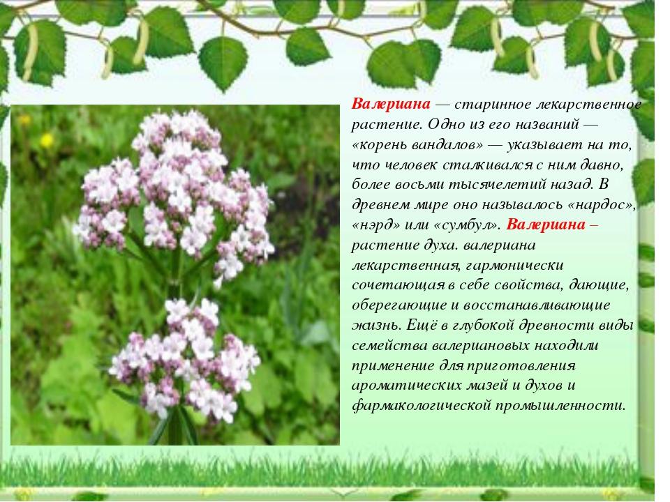 лекарственные растения нижегородской области фото и описание словам нового премьера