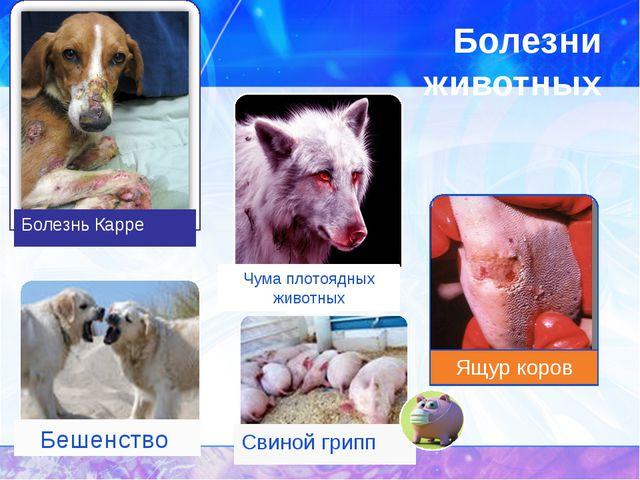 Болезни животных