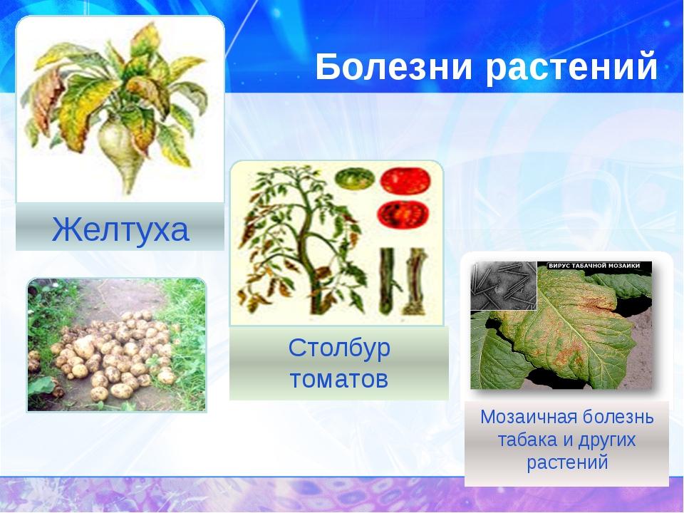Болезни растений
