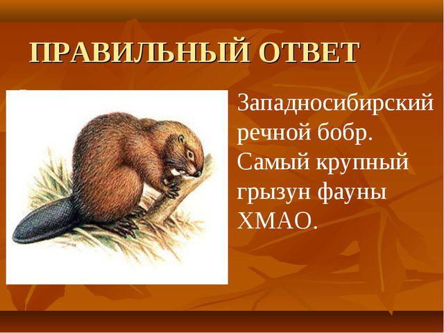 ПРАВИЛЬНЫЙ ОТВЕТ  Западносибирский речной бобр. Самый крупный грызун фауны Х...