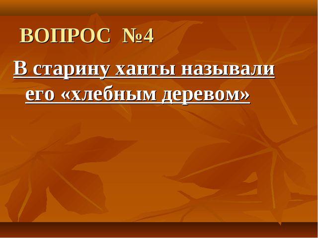 ВОПРОС №4 В старину ханты называли его «хлебным деревом»