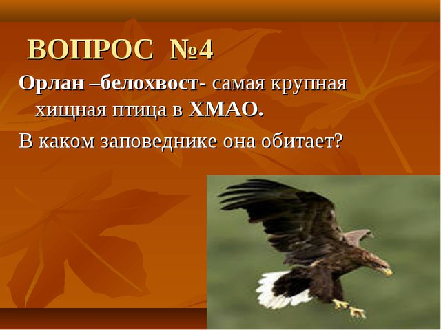 ВОПРОС №4 Орлан –белохвост- самая крупная хищная птица вХМАО. В каком запов...