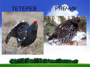 ТЕТЕРЕВ РЯБЧИК