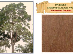 Влажные экваториальные леса Железное дерево