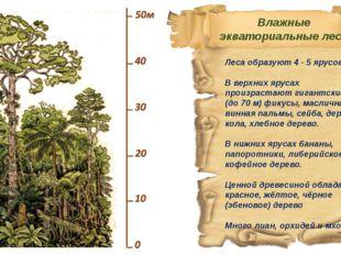 Леса образуют 4 - 5 ярусов. В верхних ярусах произрастают гигантские (до 70 м