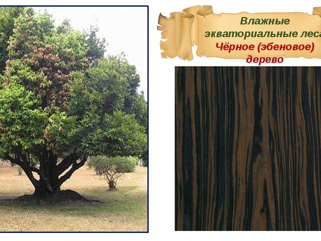 Влажные экваториальные леса Чёрное (эбеновое) дерево