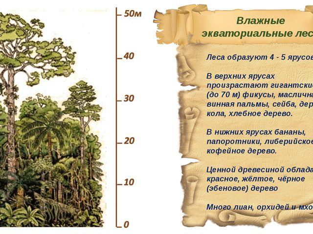 Леса образуют 4 - 5 ярусов. В верхних ярусах произрастают гигантские (до 70 м...