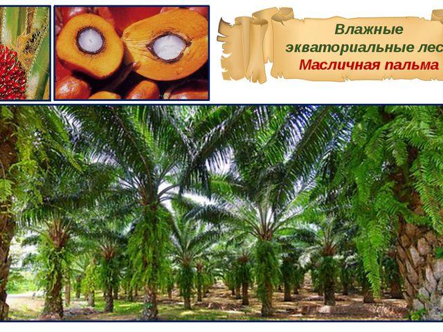 Влажные экваториальные леса Масличная пальма