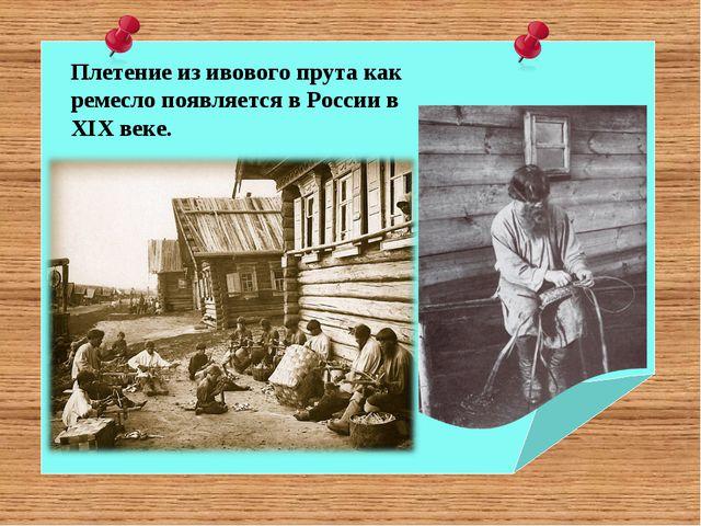 Плетение из ивового прута как ремесло появляется в России в XIX веке.