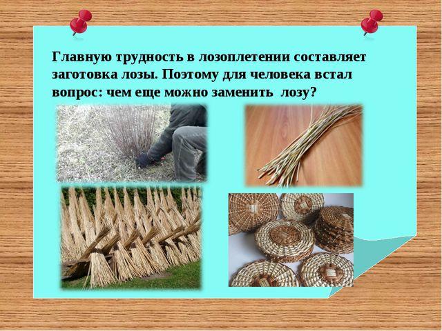 Главную трудность в лозоплетении составляет заготовка лозы. Поэтому для челов...