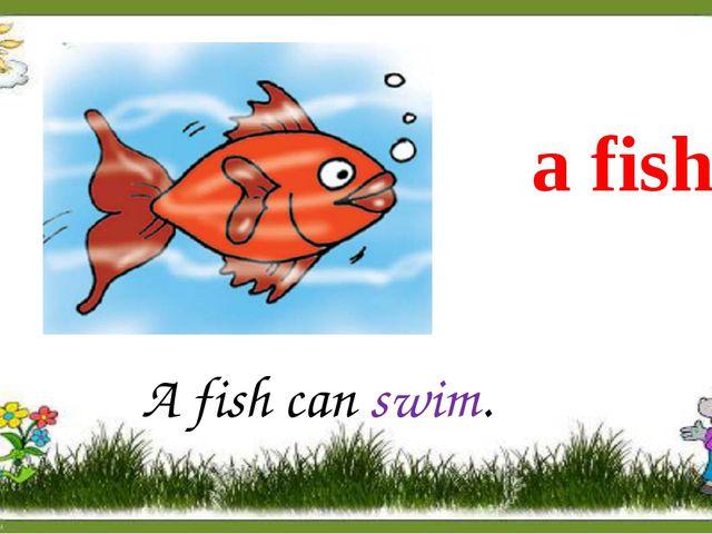 a fish A fish can swim.