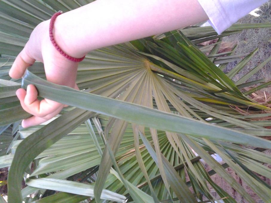 F:\Самый классный классный\Зеленое убранство Ялты\Фото0190.jpg