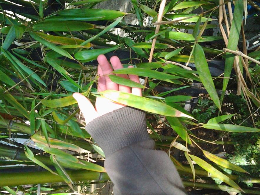 F:\Самый классный классный\Зеленое убранство Ялты\Фото0186.jpg